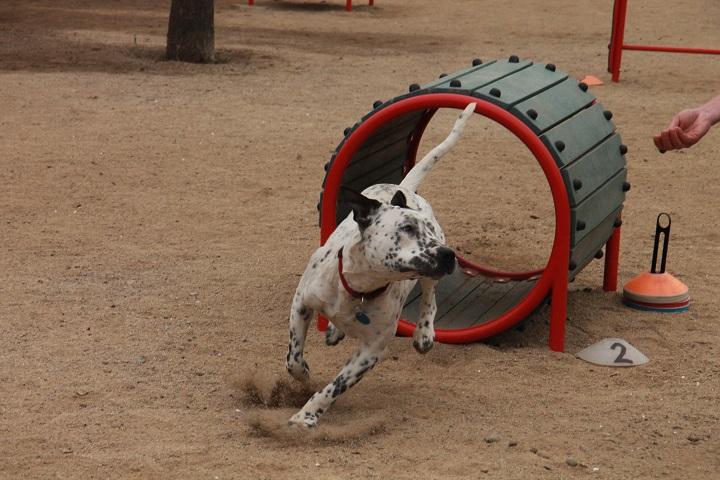 Parque recreativo canino del Bicentenario